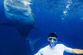 Man snorkeling with whale shark Royalty Free Stock Photo