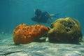 Man som snorklar den undervattens behind svampen och korall Royaltyfria Bilder