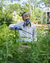 Man spraying his insect infested tomato plants in face mask and gloves insecticide on during a bad pest infestation Royalty Free Stock Photo