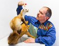 Man with stuffed stone marten biology teacher points at a dead Stock Photos