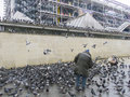 Man surounded by pigeons paris france surrounded flying around him near pompidou center Stock Images