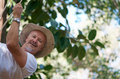 Man on swing summer fun with mature wearing cowboy hat a natural green and leafy outdoor setting Stock Photo
