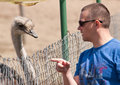 Man Talking to an Ostrich Royalty Free Stock Photography