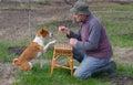 Man teaching smart basenji dog simple tricks Royalty Free Stock Photo