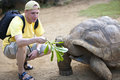 Man the tourist feeds a turtle focus on a turtle Stock Photos