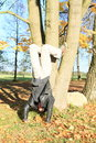 Man training handstand exercising young in black and grey clothes on grass covered with autumn leaves Stock Photo
