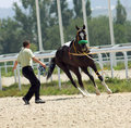 Man trains horse caucasus Stock Photo