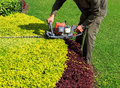A man trimming shrub with hedge trimmer closeup Royalty Free Stock Photo