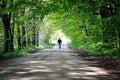 Man Walking Dog Royalty Free Stock Photo