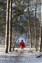 Man walking with dog in snow Royalty Free Stock Images