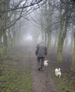 Man walking dogs in wood Stock Images