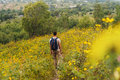 Man walking on flower meadow traveler with backpack summer rear view Royalty Free Stock Images