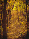 Man walking in forest in autumn along sunny day Stock Image