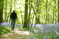 Man walking through forest of bluebells Royalty Free Stock Photo