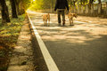 Man walking his two dogs in evening Royalty Free Stock Photo