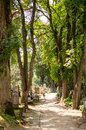 Man walking on a path in Sighisoara cemetery Royalty Free Stock Photo