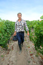 Man walking in vineyard Stock Photos