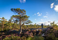 Man walking in the wilderness, forest landscape in Norway, blue sky and clouds Royalty Free Stock Photo
