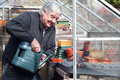 Man watering pots in a greenhouse smiling happy elderly newly sown seeds with can the springtime Royalty Free Stock Photography