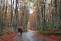 Man and woman with an umbrella walking on a forest road rainy autumn day Stock Photos