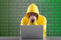 Man in a yellow jacket working on the internet gray background Stock Photos