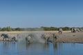 Manada del elefante que llega el waterhole en el parque nacional de etosha namibia Fotos de archivo
