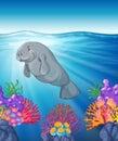 Manatee swimming under the ocean