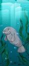 Manatee swimming under the water