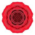 Mandala rose flower kaleidoscope isolated en blanco Imágenes de archivo libres de regalías
