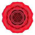 Mandala rose flower kaleidoscope isolated su bianco Immagini Stock Libere da Diritti