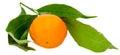 The Mandarin Orange (Citrus Re...