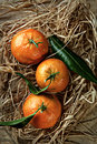 Mandarin organic ripe tangerines with green leaves lying on the straw Royalty Free Stock Photos