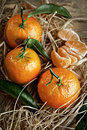 Mandarin organic ripe tangerines with green leaves lying on the straw Stock Photos