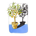 Mandarin tree in a pot with a shadow. marker illustration.