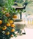 Mandarinas Imagen de archivo libre de regalías