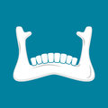 Mandible human . Lower jaw. Anatomy of bone. Part of sku Royalty Free Stock Photo