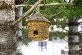 Manger for birds a little hanged to a coniferous tree at chianale val varaita cuneo piedmont italy Stock Photo