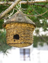 Manger for birds a little hanged to a coniferous tree at chianale val varaita cuneo piedmont italy Stock Image