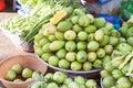 Mangifera mango a lot of fresh mangos at a market in phu quoc vietnam Stock Photography