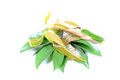 Mango and chikoo leaves Royalty Free Stock Photo
