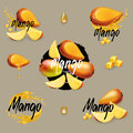 Mango collection. Royalty Free Stock Photo