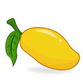 Mango fruit and leaf on white background Royalty Free Stock Photo