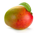 Mango with leaves Royalty Free Stock Photo