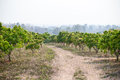 Mango orchards with a roadway Royalty Free Stock Photography