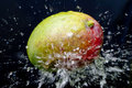 Mango and water splash Stock Image