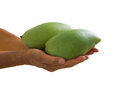 Mangoes a couple of on palmar surface of both hands Royalty Free Stock Photos