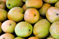 Mangoes in fresh raw and shown as raw and healthy fruit or agriculture concept Royalty Free Stock Photo