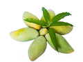 Mangoes in star shape with leaves on top Royalty Free Stock Images