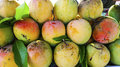 Mangos bunched together in a fruit market Stock Photo