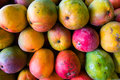 Mangos close up view of ripe florida Stock Photography